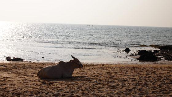 ゴアのビーチ。
